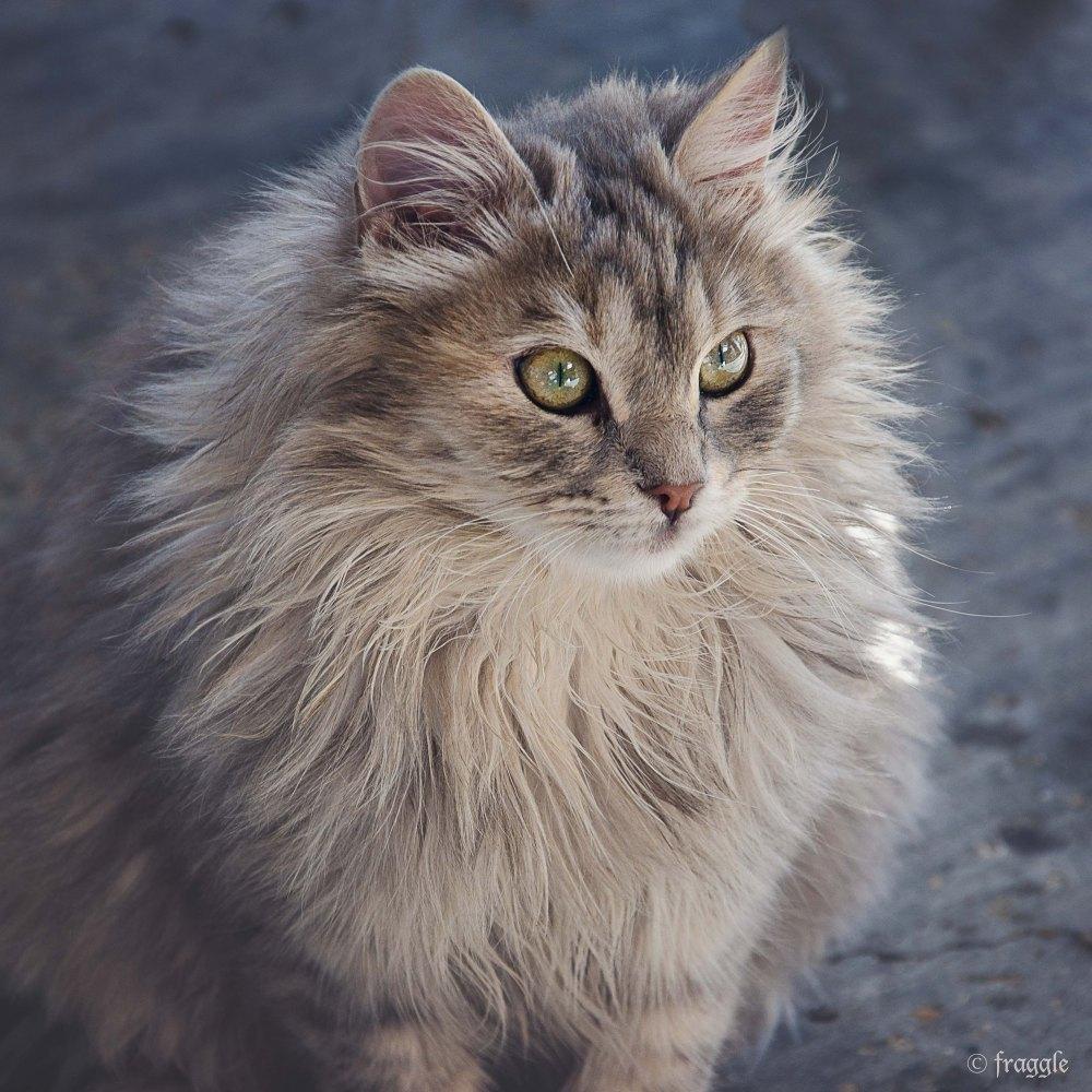 Cat ~ Cyprus