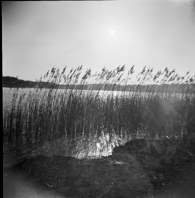 Druridge Bay Bullrushes