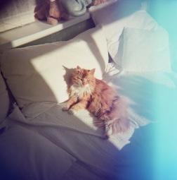 Yoyo in the sun