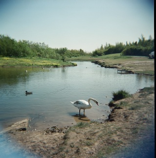 Swan at Wardley