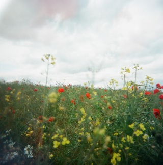 Flowers in a field