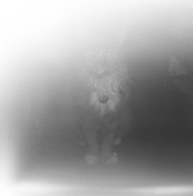 Herky Ghost
