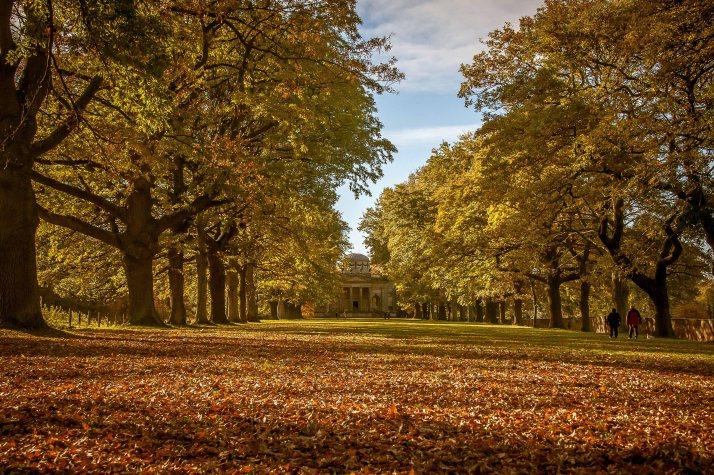 The Avenue of Oaks