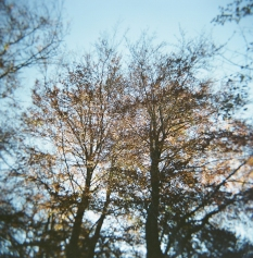 More Trees at Chopwell