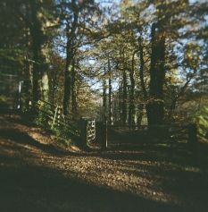 Fence at Chopwell Woods