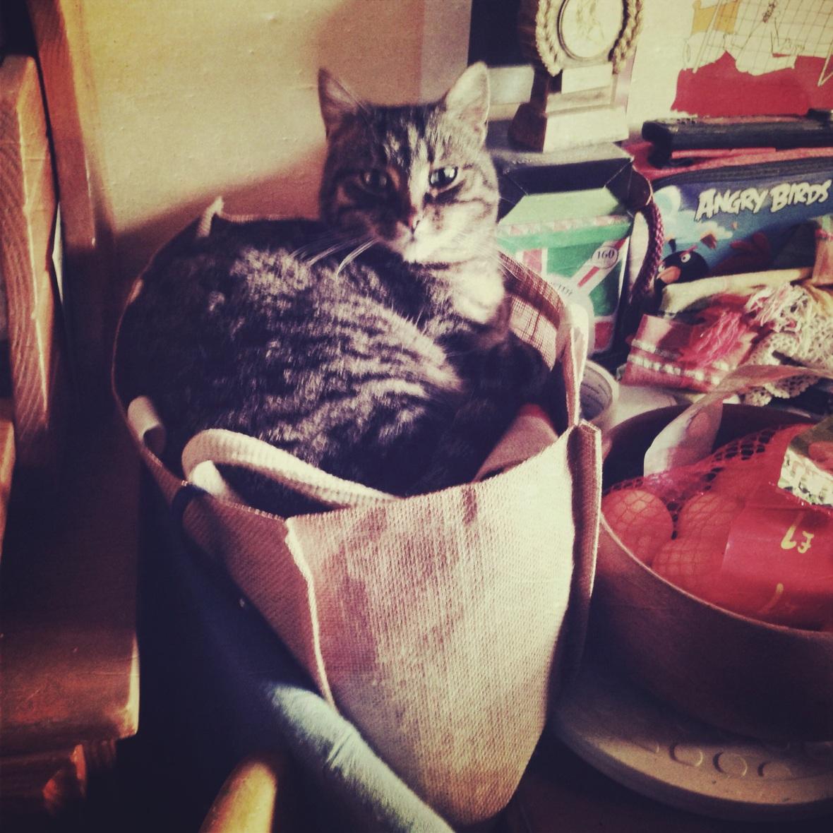Helen's cat in a bag