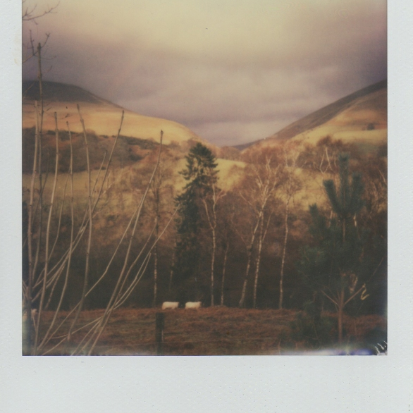 Sheep, mountains, rainbow.