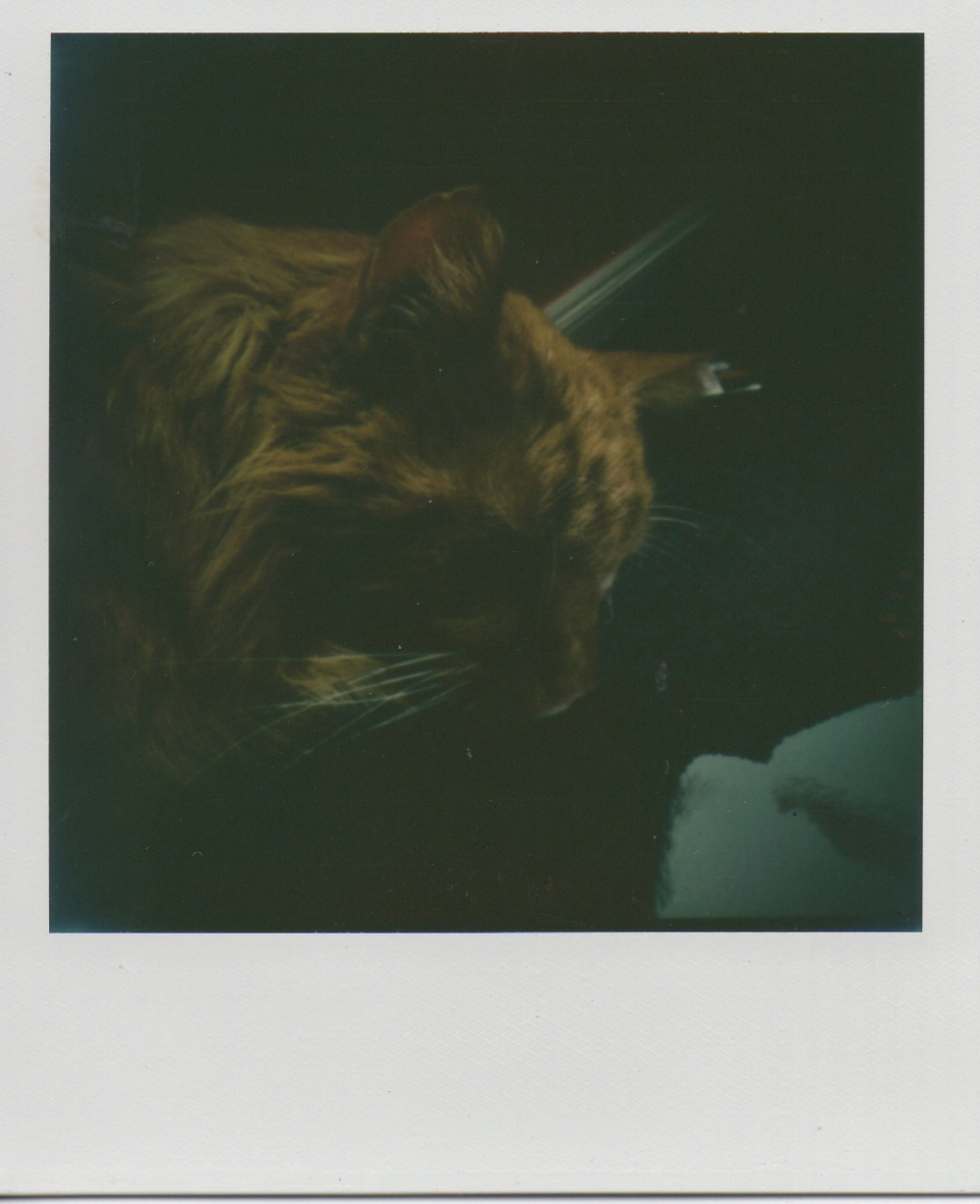 Converted with Instant lab