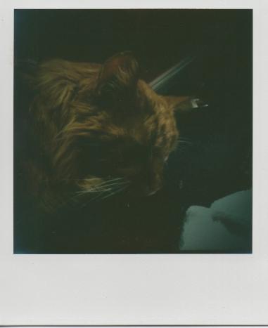 Herky dark.
