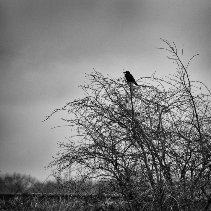 grey day sentinel