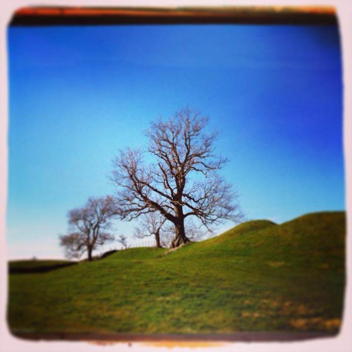 Tree on humps