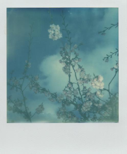 Blossom & Blue sky
