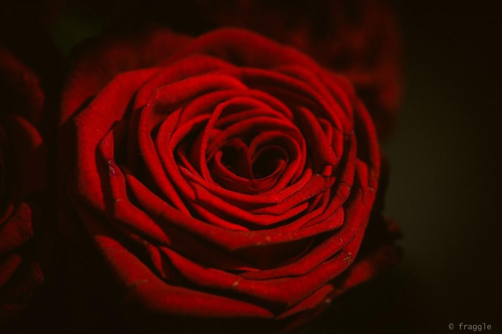 roseapril-2