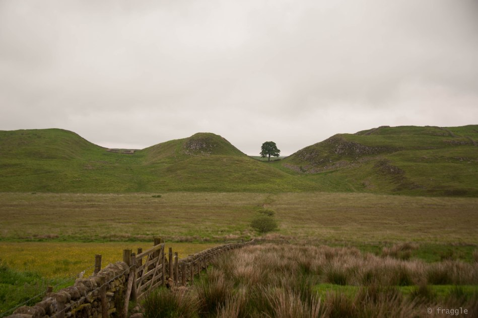 Sycamore Gap, unprocessed