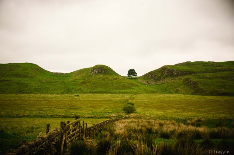 Sycamore Gap and Replichrome.