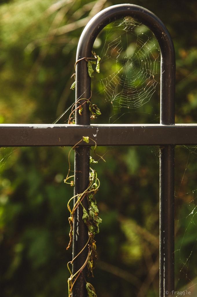 Weeds and webs