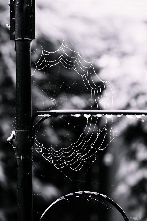 webs1-3