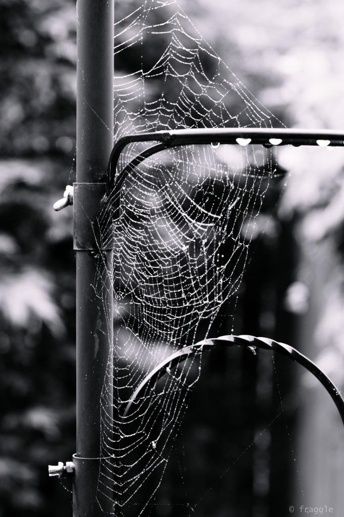 webs1-5