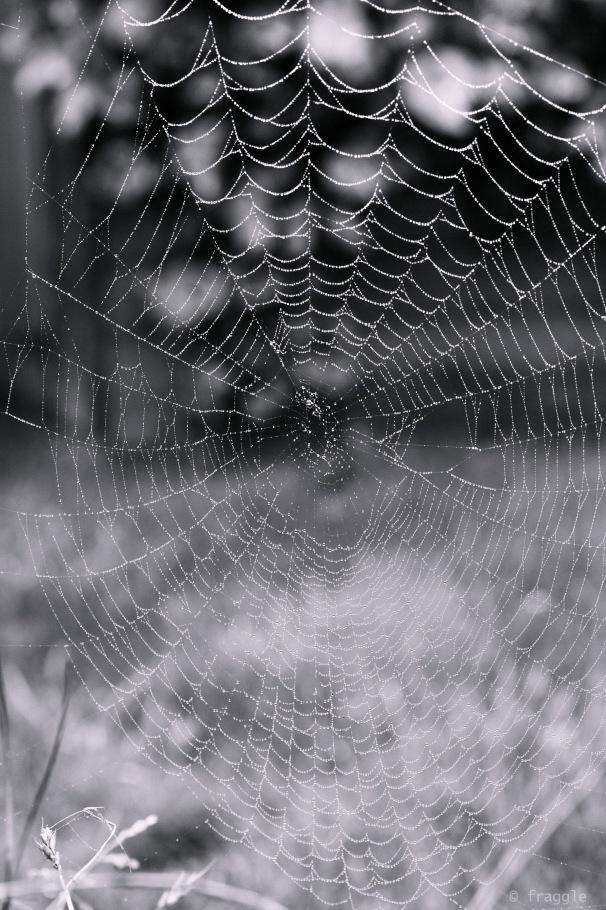 webs1-7