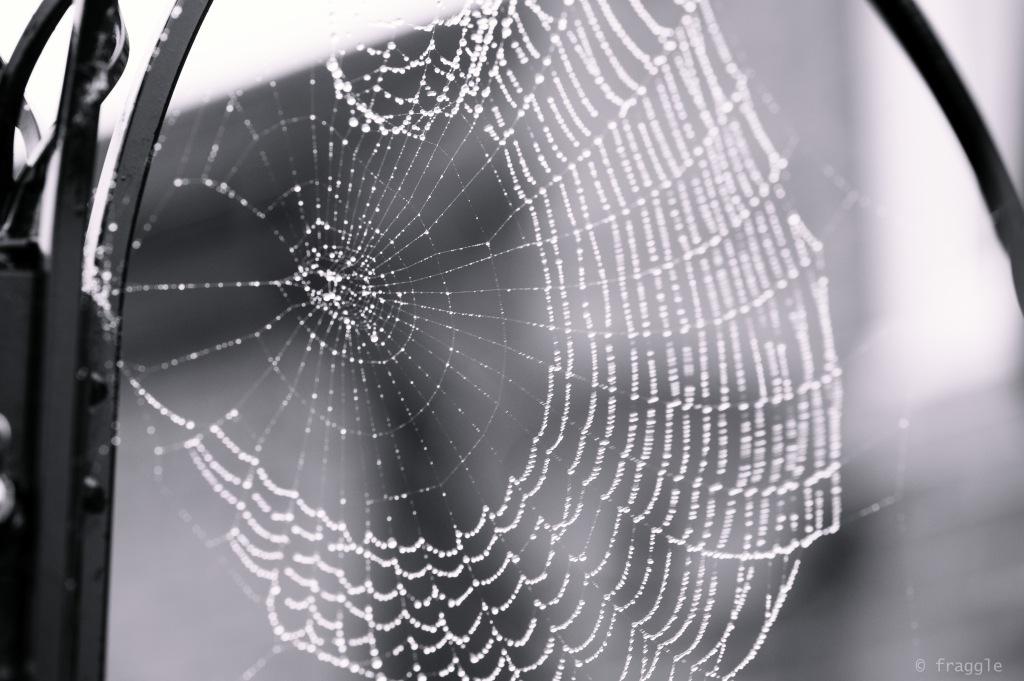 webs1