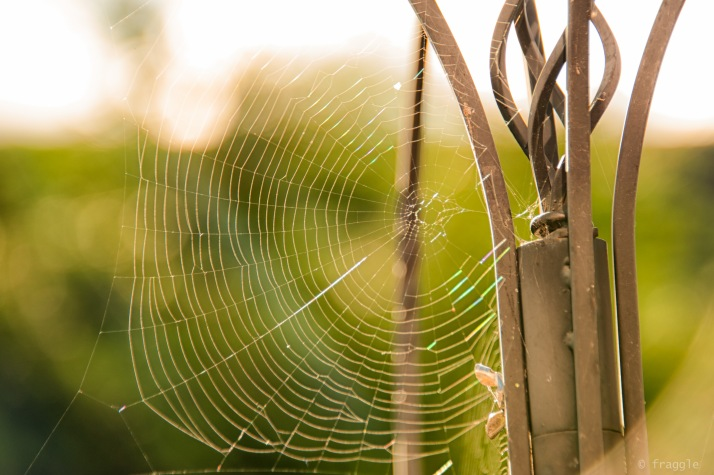 spidey web