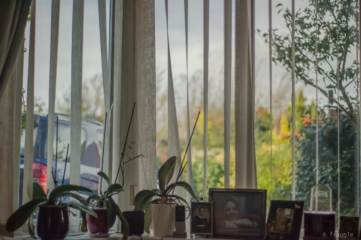 front window and orchids