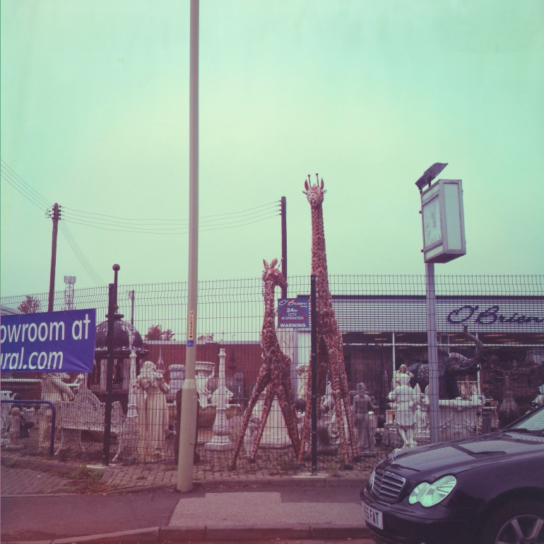 The Giraffes of East Boldon