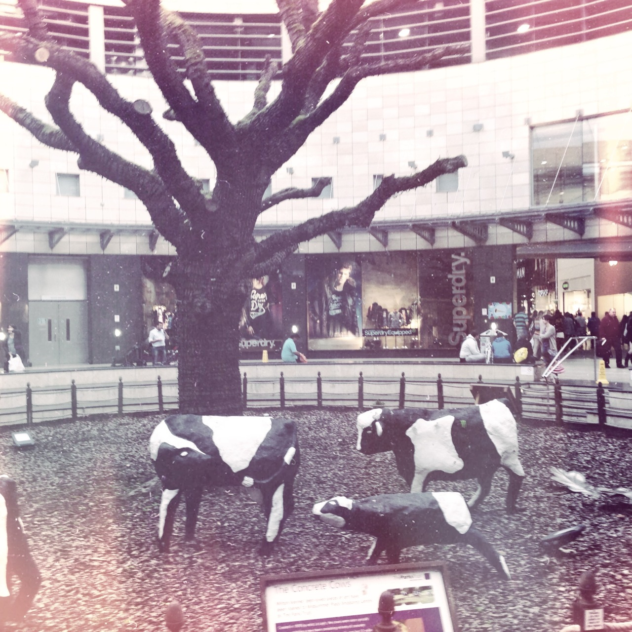 The Cows of Milton Keynes