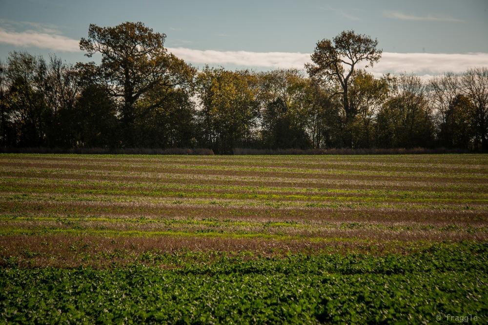 stripey field