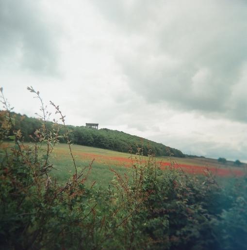 Penrose in Poppies
