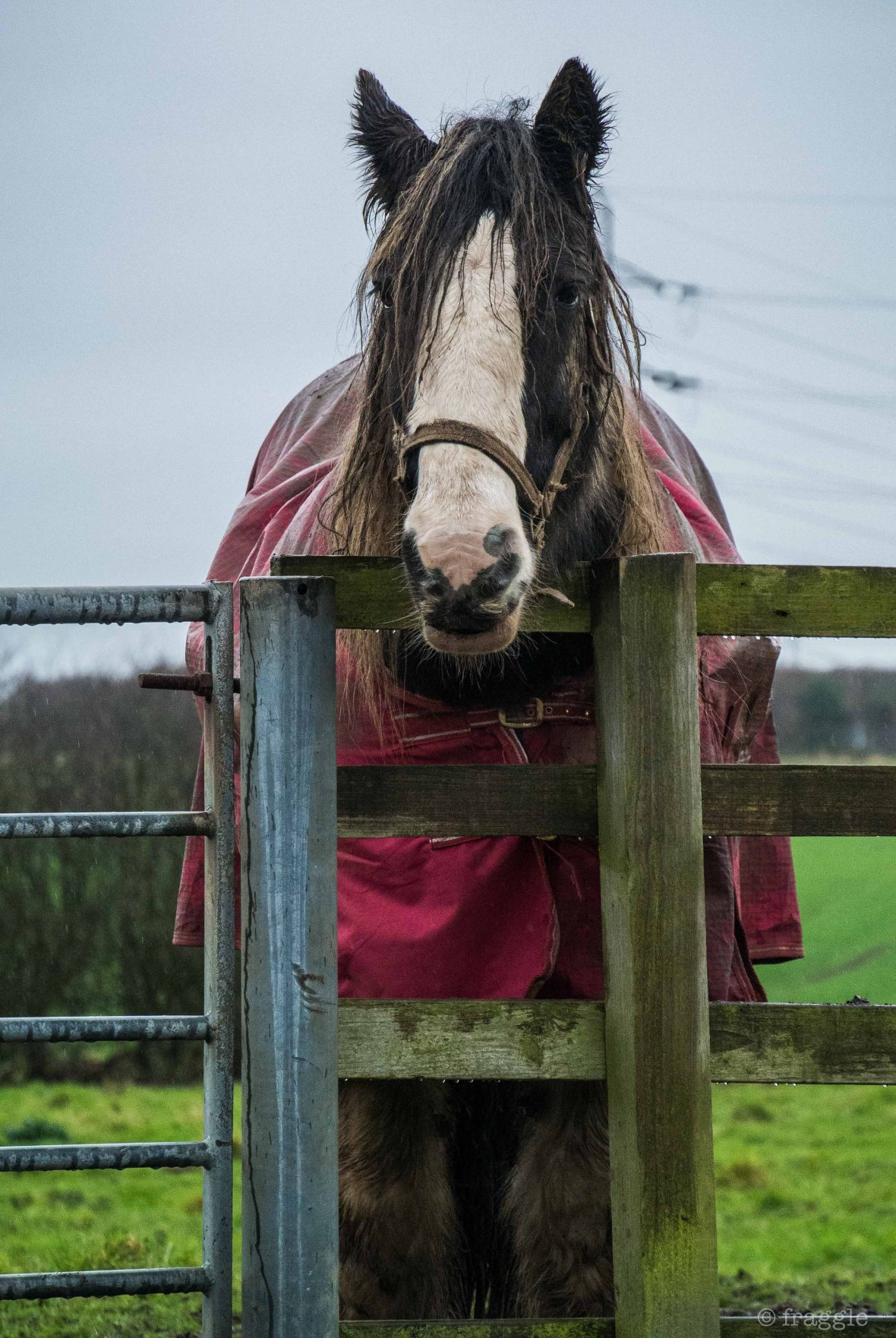wet horse