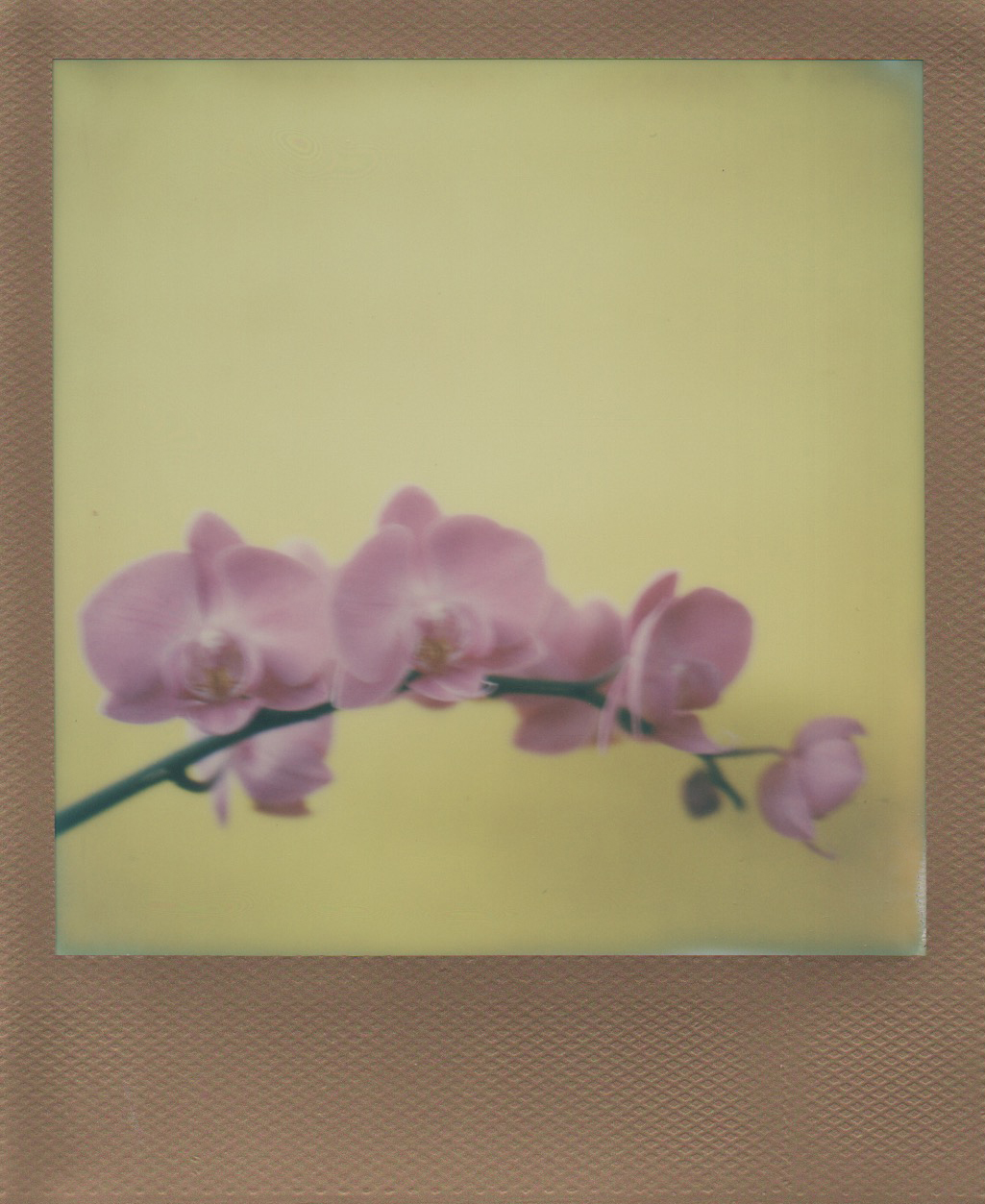 10/1 orchid 1