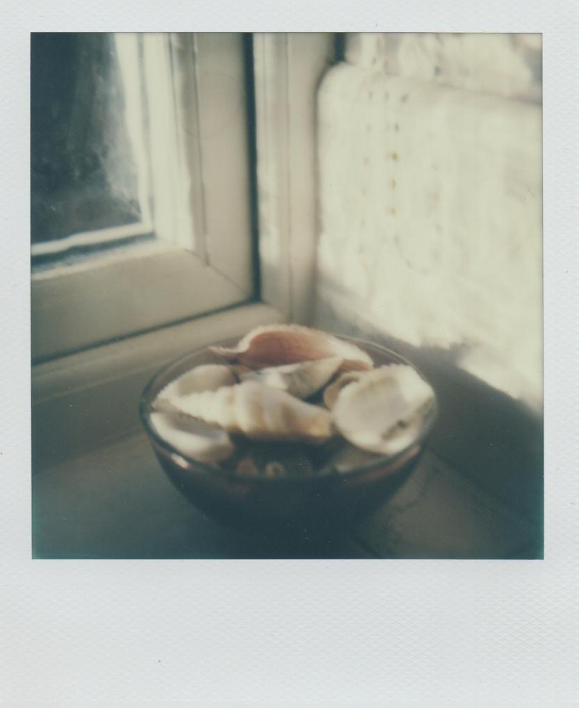 shells 3/1/13