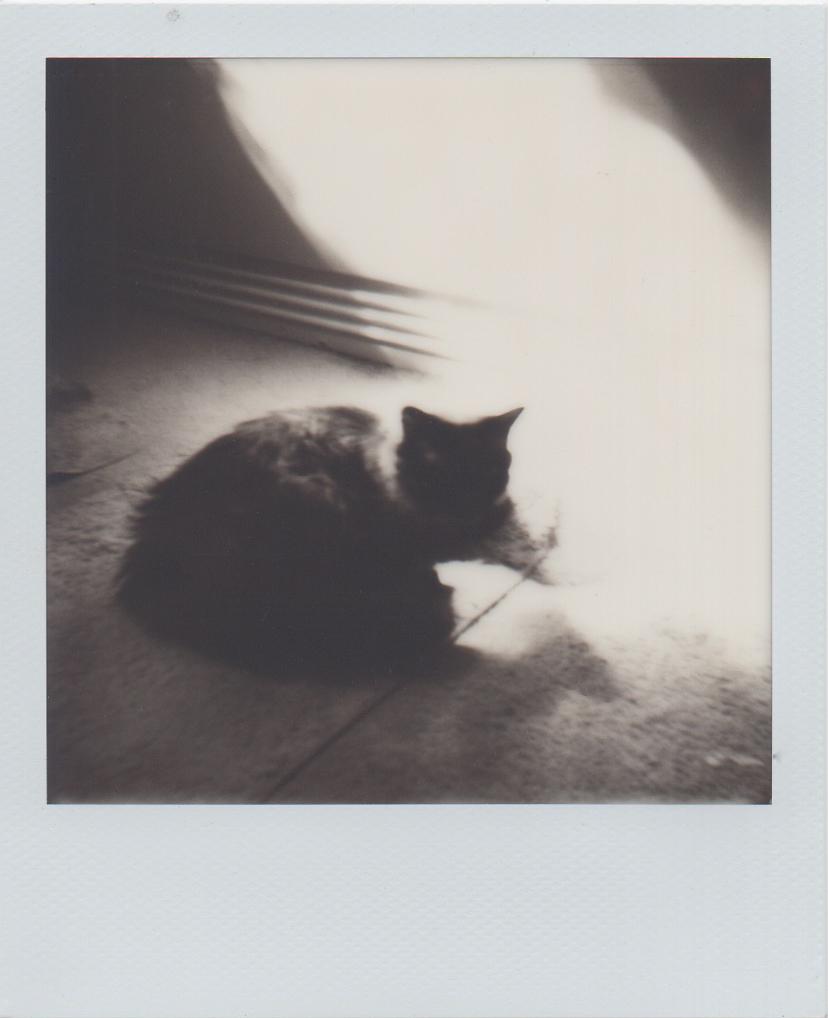 International Cat of Mystery