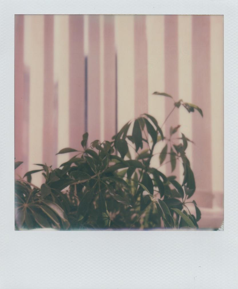 potplant (10)