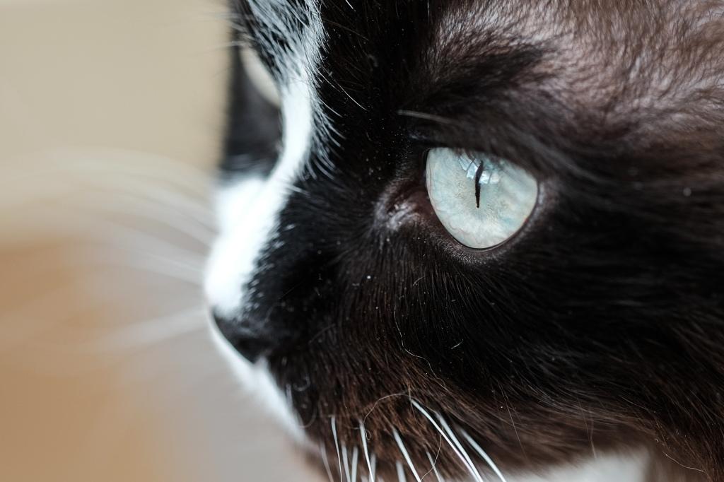Skye's eye macro