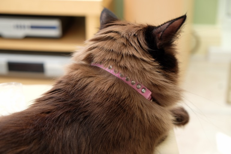 Storm in a collar