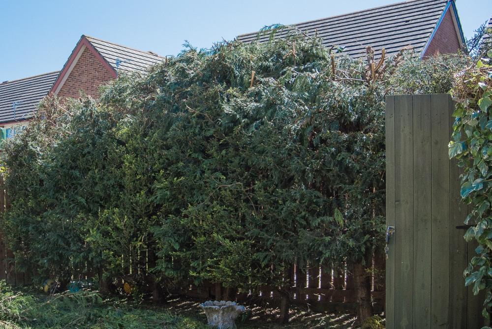lumpy hedge