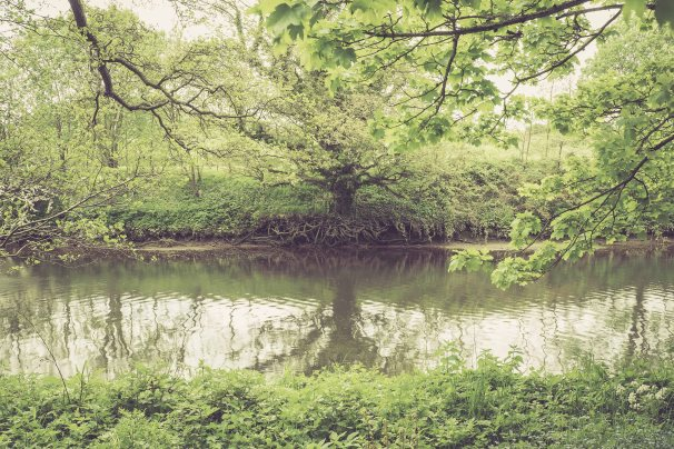 River Coquet and old tree