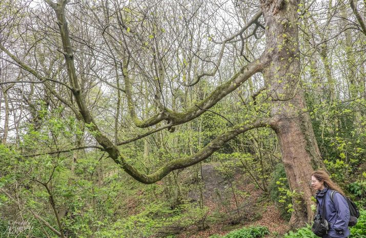 Ancient woodland around the castle, and Sophie.