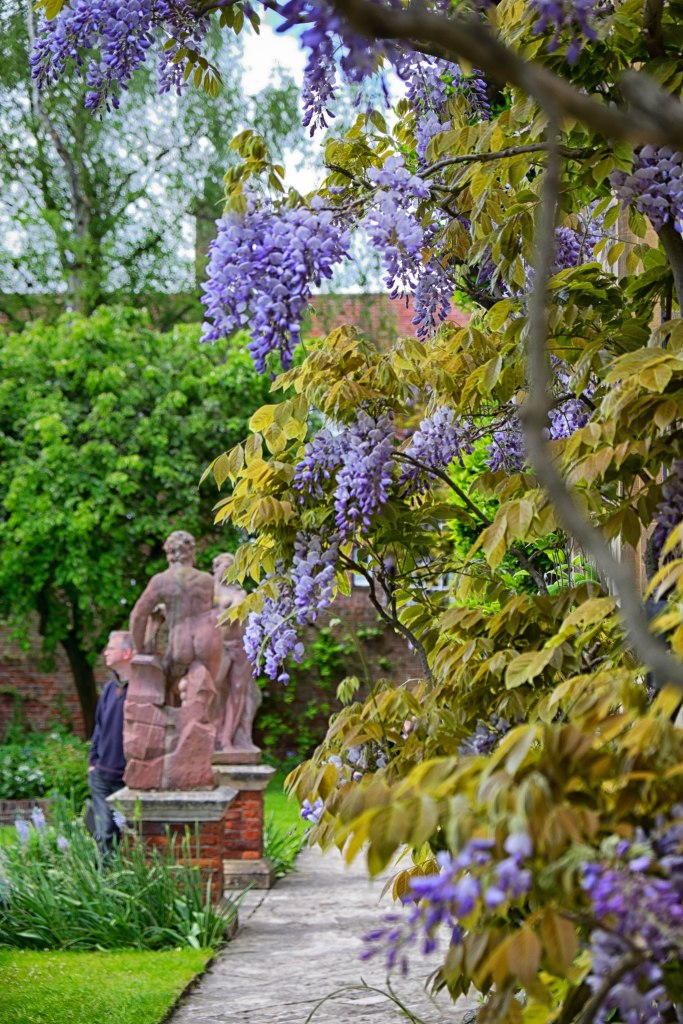 Wisteria and naked bum statue