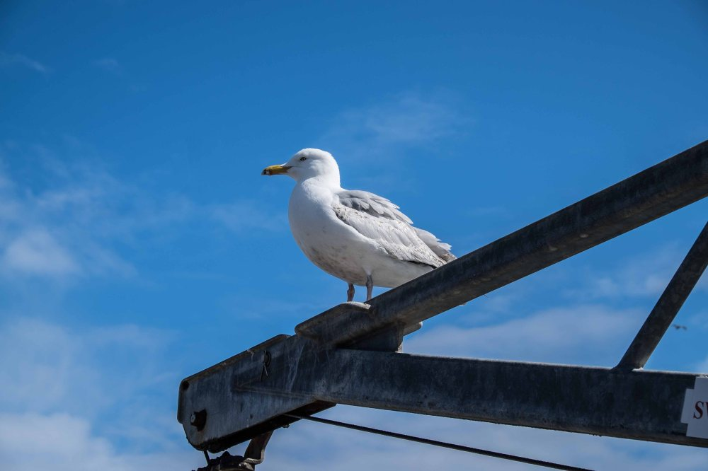 guarding the harbour