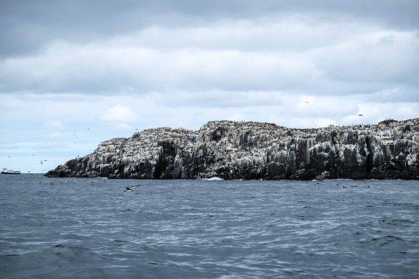 The Farne Islands