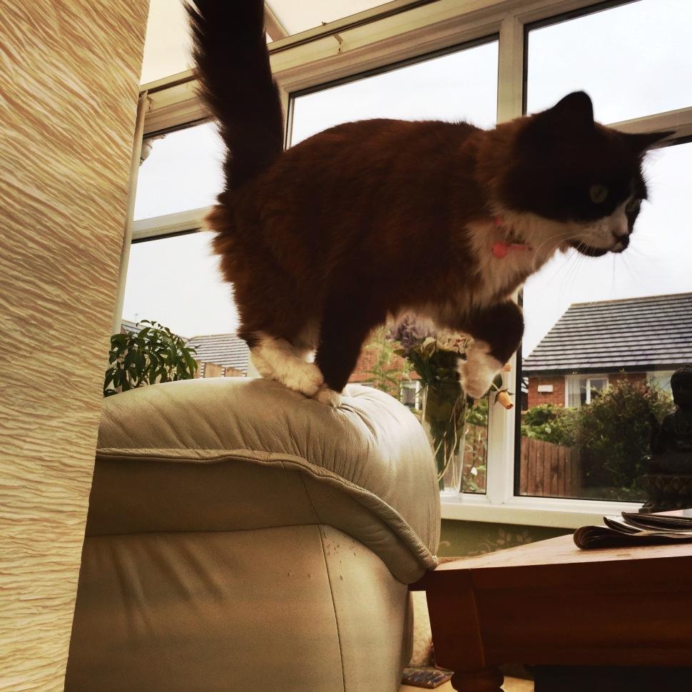 leaping Skye