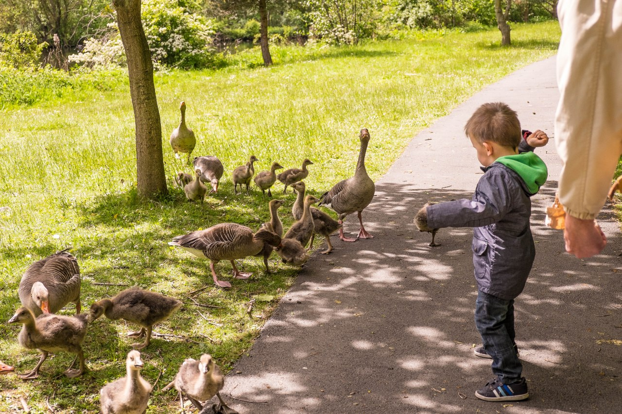 feed the geese, tuppence a bag (actually 3 bags for a quid).