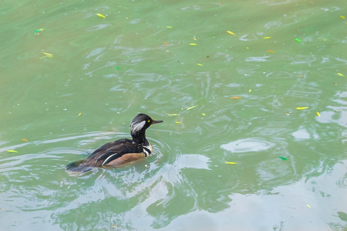 stripey floater