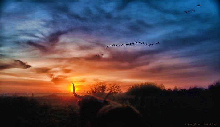 If I had Wings ~ Drudge Bay 2011