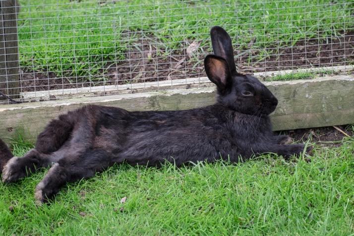 Bunny chilling.