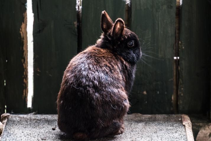 Backlit Bunny Bigeyes