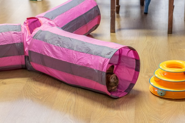 snooze tube